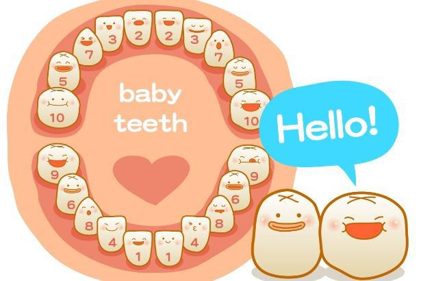 Baby teeth